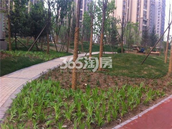 小区中心的绿化