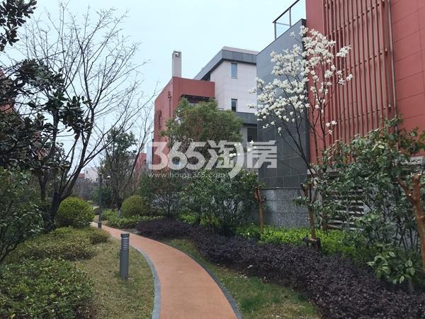 吴月雅境小区实景图(2017.3摄)