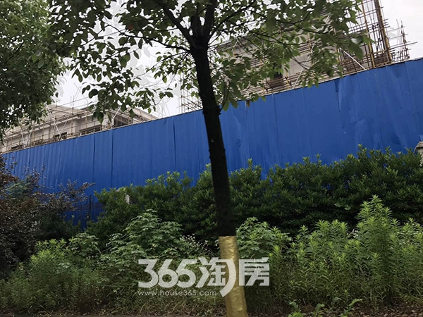 美好紫蓬山壹号工程实景图(2017.6.21)