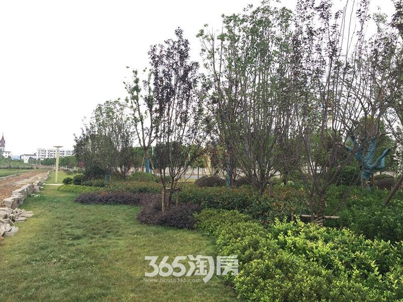华南城紫荆名都工地实景图(2017.7)