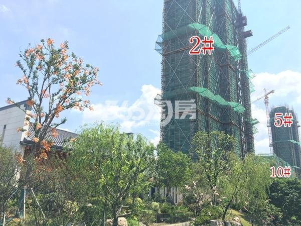 蓝光雍锦里高层、洋房实景图(2017.8 摄)